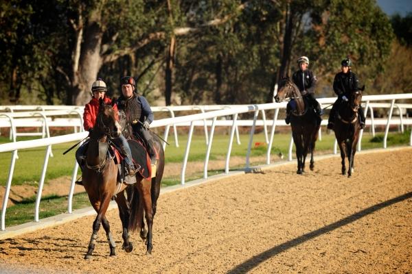 Les premieres empreintes de sabots sur le Polytrack d' Hawkesbury Race Club en Australie.